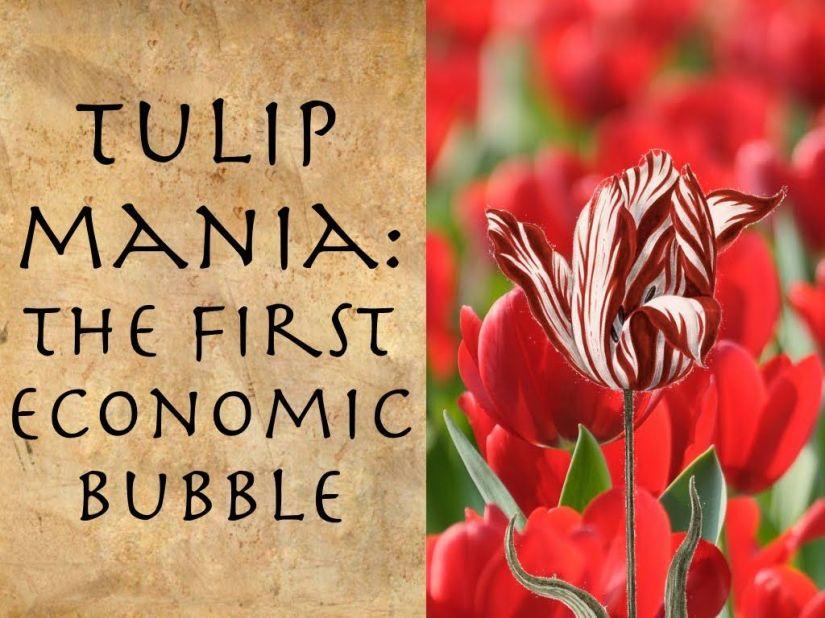 tulip mania.jpg